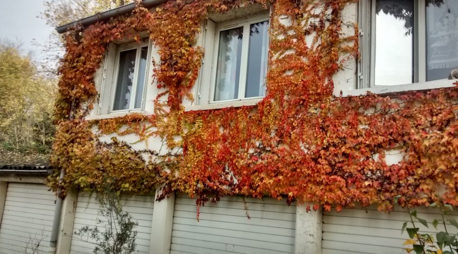 moselle2